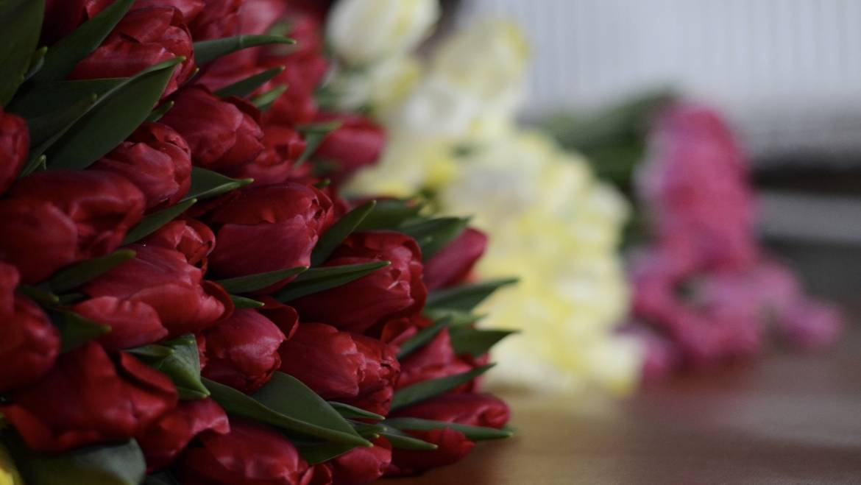 Более 36 расцветок